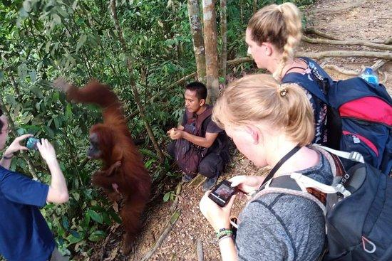 K77Travel - Bukit Lawang Jungle Treks