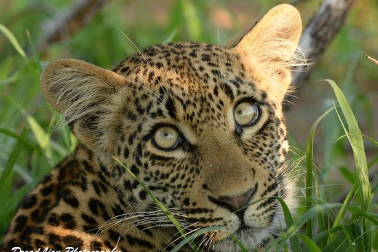 DreadLion Safaris