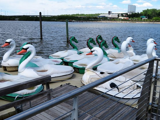 Swan Peddle boats