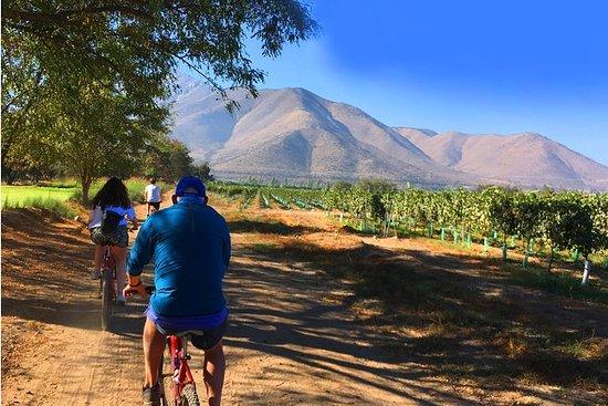 Recorrido del vino en bicicleta por...