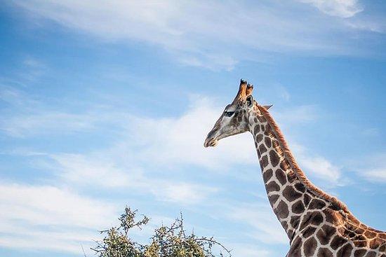 Safari tour di 3 giorni nella Garden