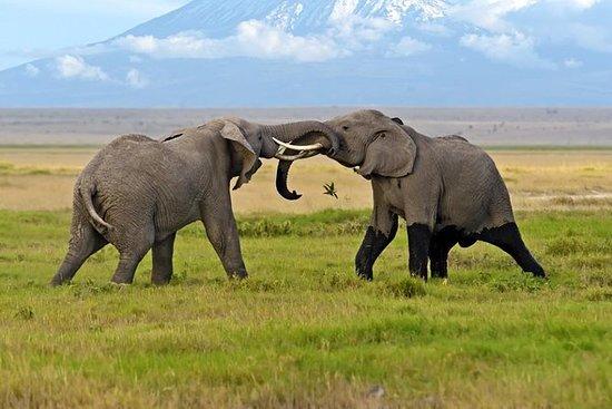 13 dager Best of Kenya Wildlife...