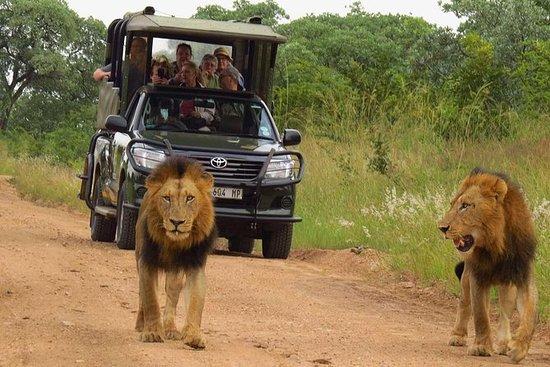 Alquiler de vehículos y guías! Safari...