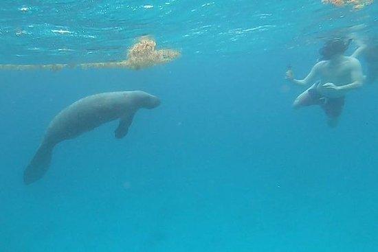 MANATEE SNORKELING, requins, raies et...