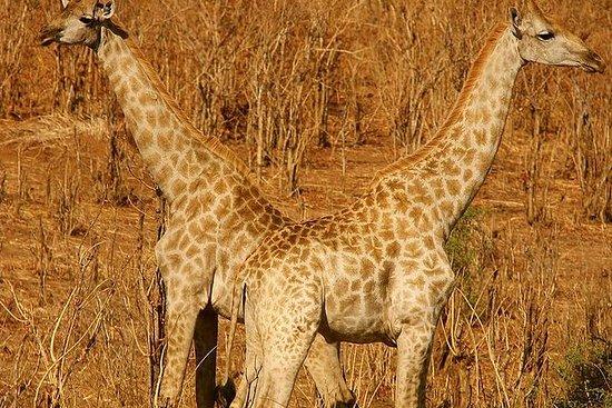 Safari nel parco nazionale di Hwange