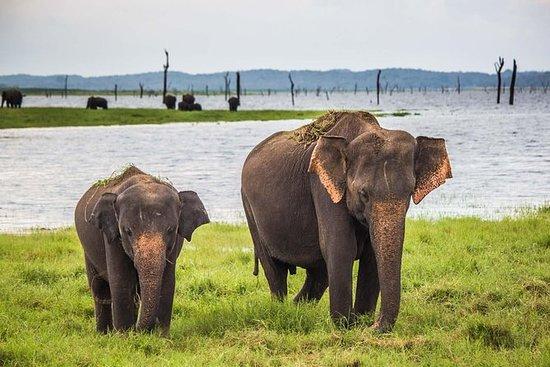 Privat tur: Kaudulla National Park...