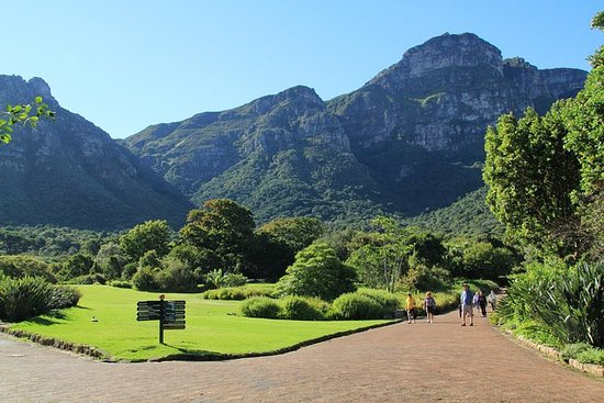 Full Day City & Kirstenbosch Gardens