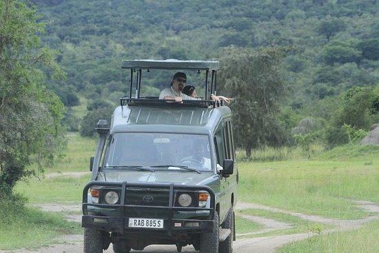プライベートデイトリップ、野生動物サファリアカゲラ国立公園(フルパッケージ)