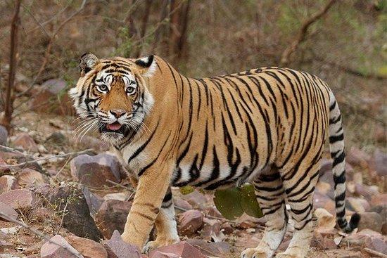 Rajastão com vida selvagem