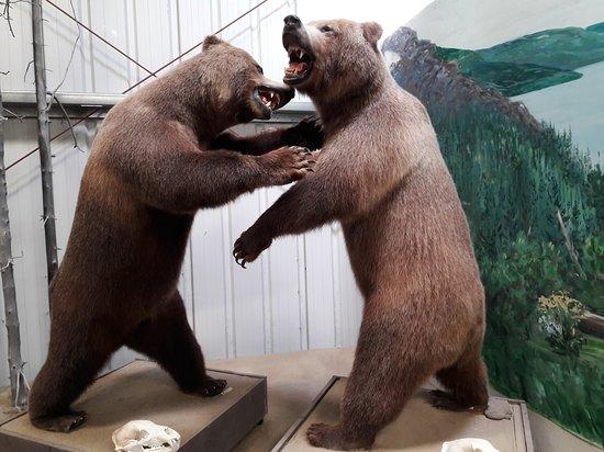 Carcross, Canada: Bears