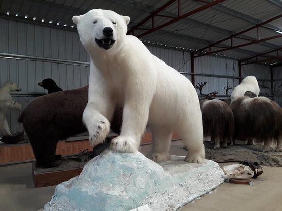 Carcross, Canada: Polar Bear