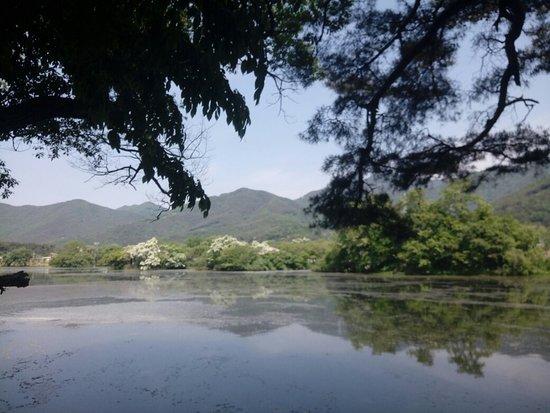 Wiyangji