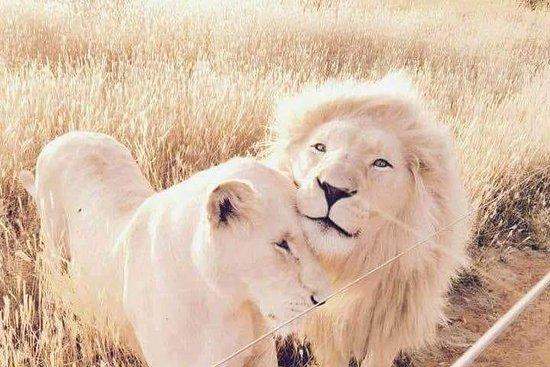 Love of Lions Sanctuary