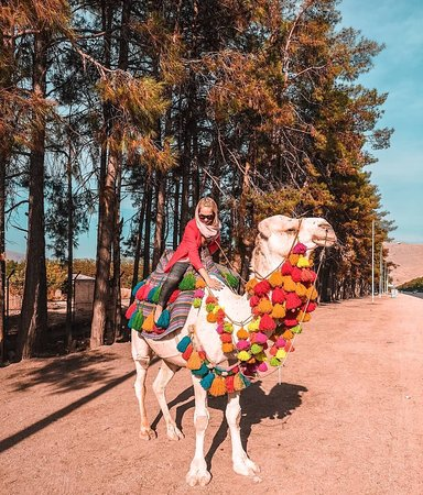 You can see many tourists ride on a camel on the way of Persepolis as an early morning or evening outing🐫