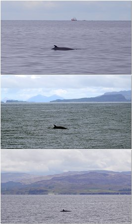 A few of our many Minke whale snaps.