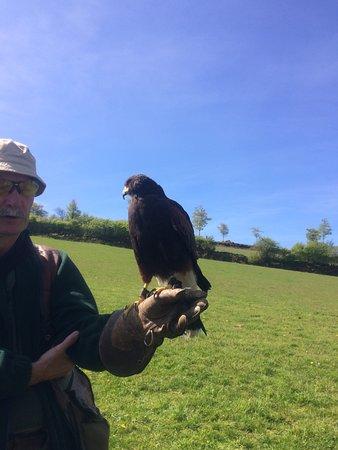 North Devon Hawk Walks : Cassius and Nigel