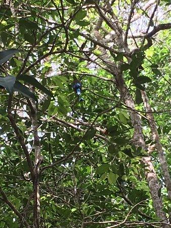 Tulum, Mexico: Cenote sac-actùn