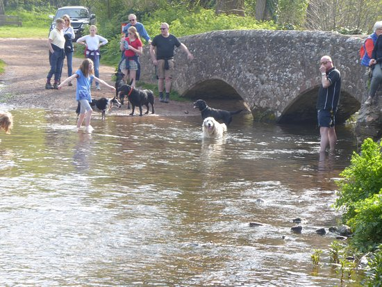 gallox bridge - a great area for dogs