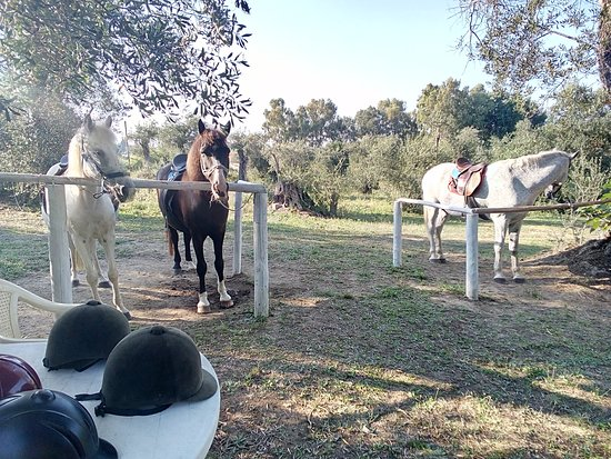 Roda, Yunanistan: Welcome to Corfu from Angel's Horses with best wishes