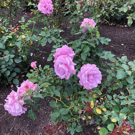 Inez Grant Parker Memorial Rose Garden, San Diego - TripAdvisor