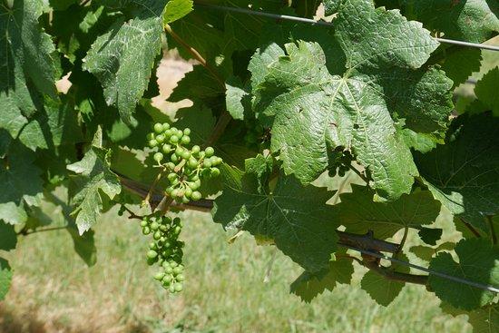 WineTrax