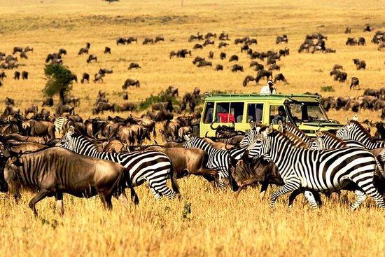Traustine Adventure Safaris