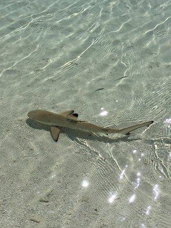 Vakarufalhi Maldives-billede