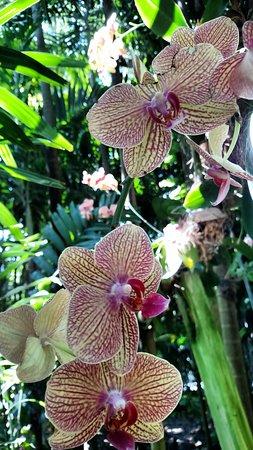 Fairchild Tropical Botanic Garden Orchid Show
