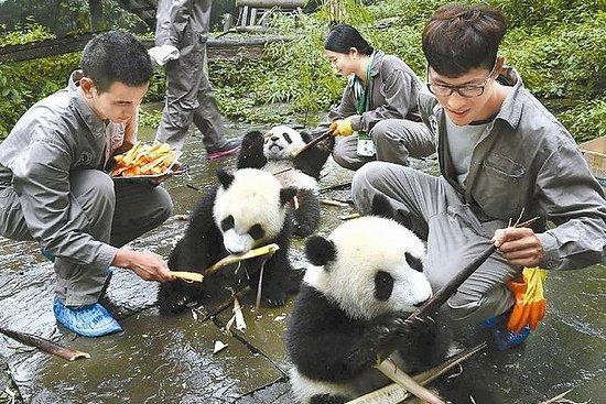 都江堰熊貓基地全日誌願者體驗