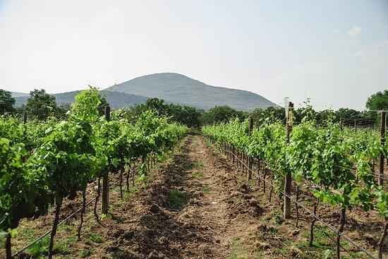 Vineyard e Peña de Bernal da Città