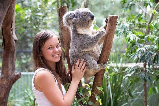 Kangaroos & Koala experiencia de...