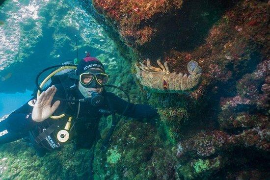 全天潜水(PADI)和莱夫卡达私人游览的海滩