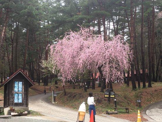 Morioka, Japonsko: 都南つどいの森