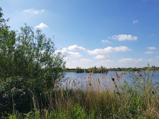 RSPB Fen Drayton Lakes