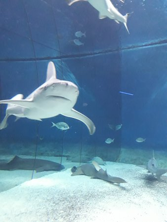 ジェノヴァ水族館ジェノヴァ水族館 Aquarium of Genoa