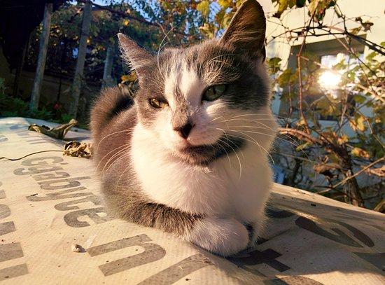 Oving, UK: Cat under the sun