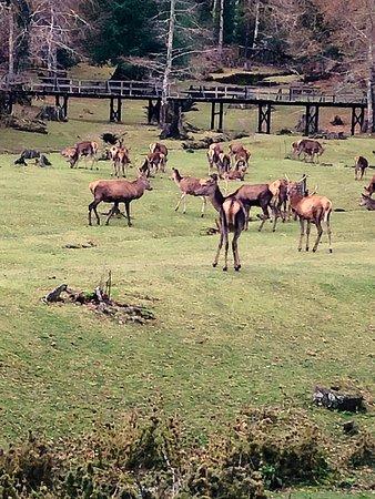 El Bosque De Los Ciervos