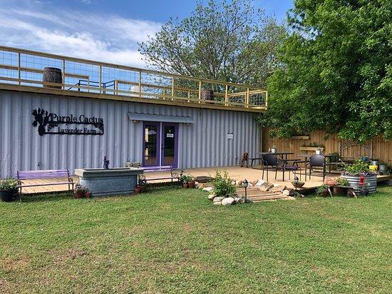 Purple Cactus Lavender Farm