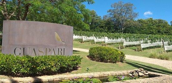Vinícola Guaspari em Espírito Santo do Pinhal, lugar incrível! Lindo, organizado, atendimento excelente! Super recomendo a visita!