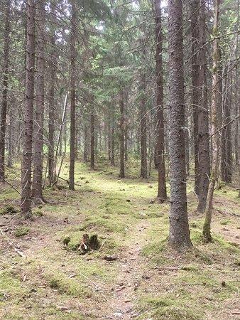 Falun, Sverige: Källslätten - en oas lite utanför allfarvägen!