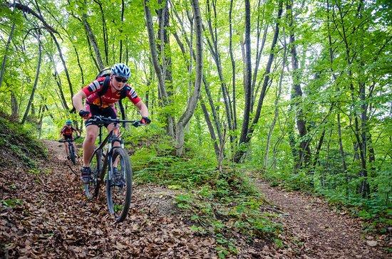 Take a bike through the forest hills around Samobor