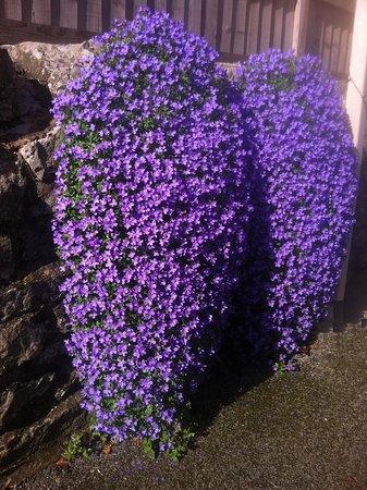 Nannerch, UK: Flowers outside in march
