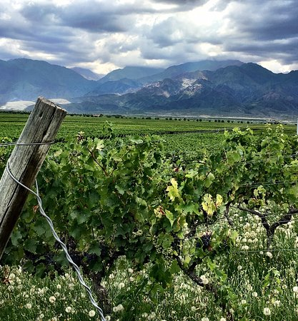 All day, small group, luxury wine tour with gourmet lunch – fotografia