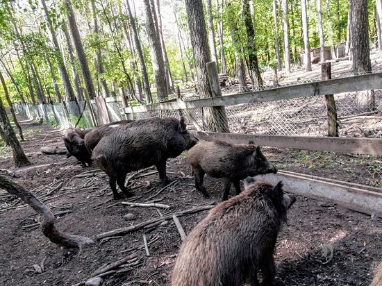 Wildschweingehege (Wild Pig Enclosure)