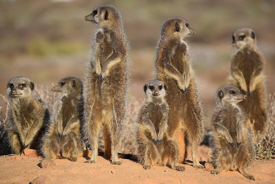 Fabulous Venue and as for the Meerkats .. Amazing
