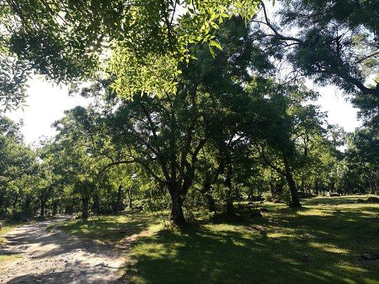 Bosque de la Herreria