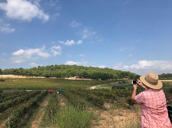 Subirats, Spania: la Vendimia