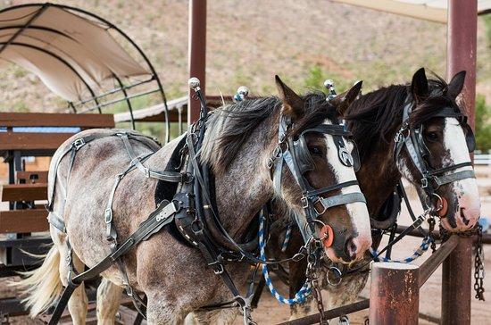 Horsin' Around Adventures: Wild West Wagons.