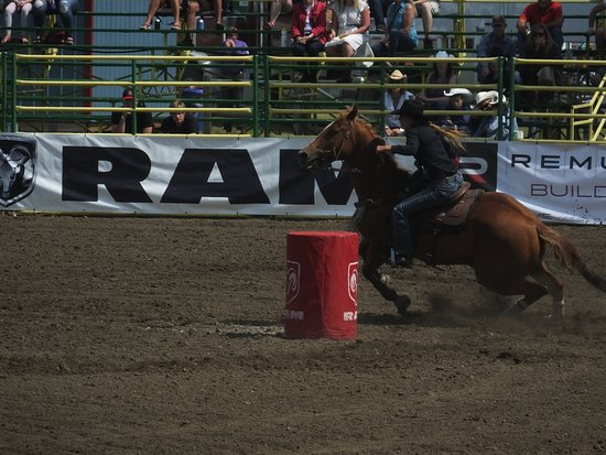 Strathmore Stampede All You Need To Know Before You Go