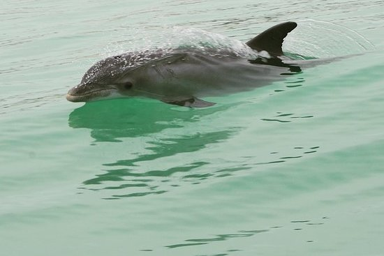 Dolphin-Watching Cruise i Mexicogolfen